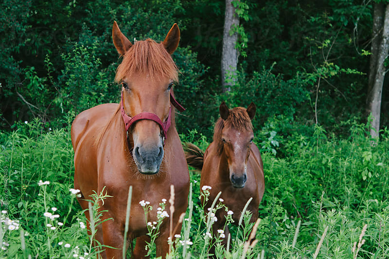 A mother horse and her child by Deirdre Malfatto for Stocksy United