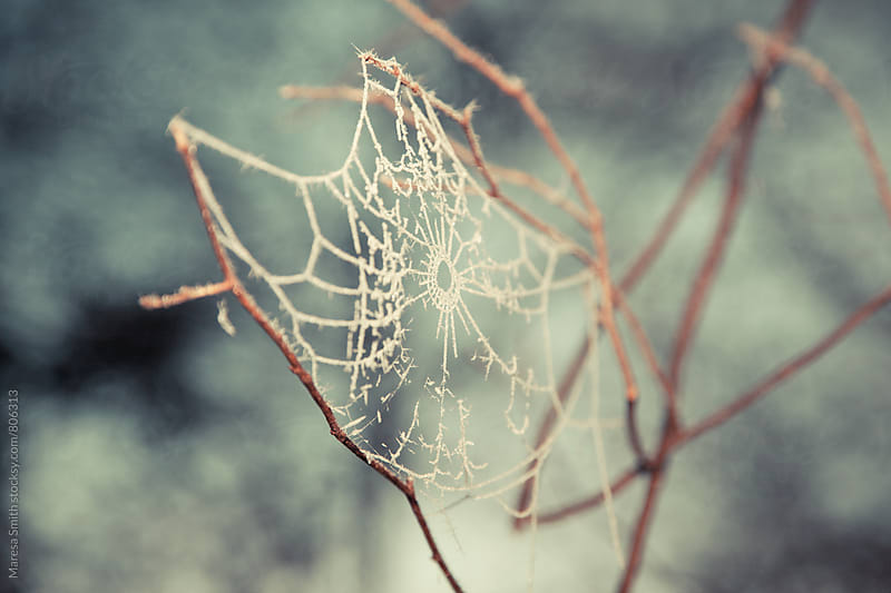 A frosty cobweb on some branches on a pale blue wintery background by Maresa Smith for Stocksy United