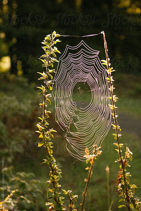 Spider web glistening in the setting sun near a forest trail by Mihael Blikshteyn for Stocksy United