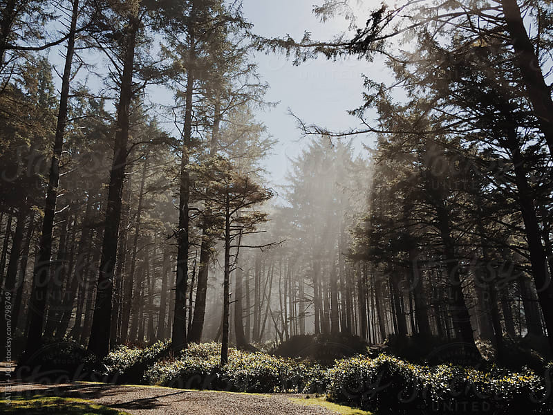 Sunlight in the trees by KATIE + JOE for Stocksy United