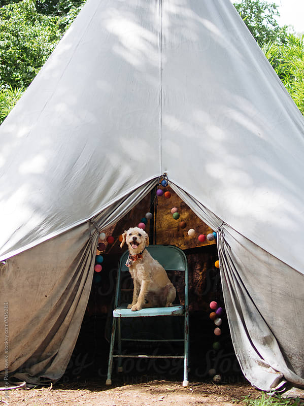 Happy dog sitting on chair in tent  by Jeremy Pawlowski for Stocksy United