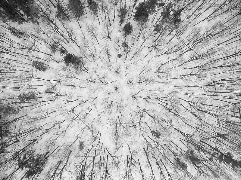Black & white aerial photo of a forest in winter by Jen Grantham for Stocksy United