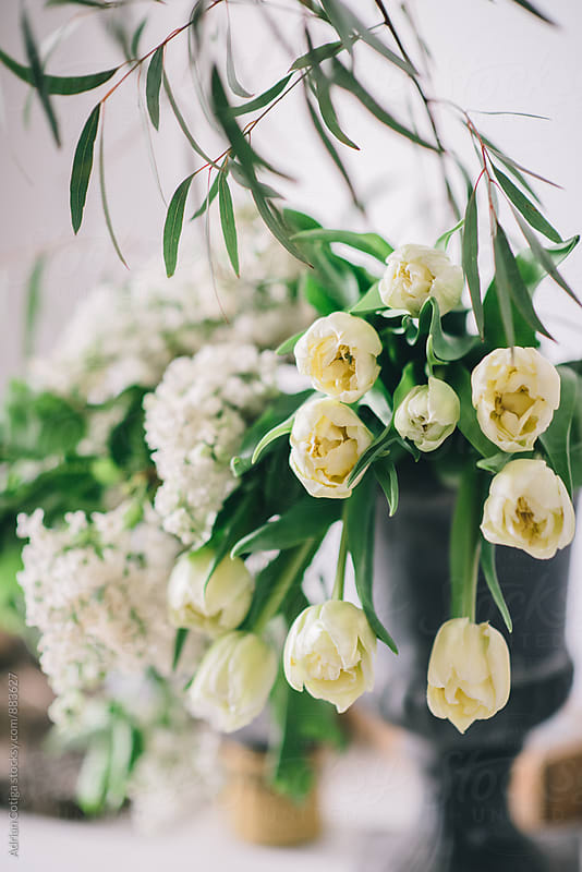 White tulips in a vase by Adrian Cotiga for Stocksy United