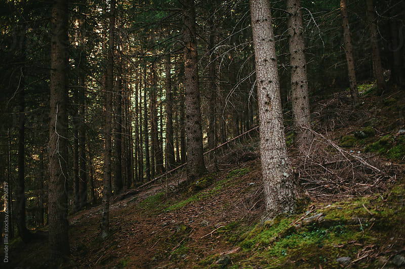 Forest undergrowth by Davide Illini for Stocksy United