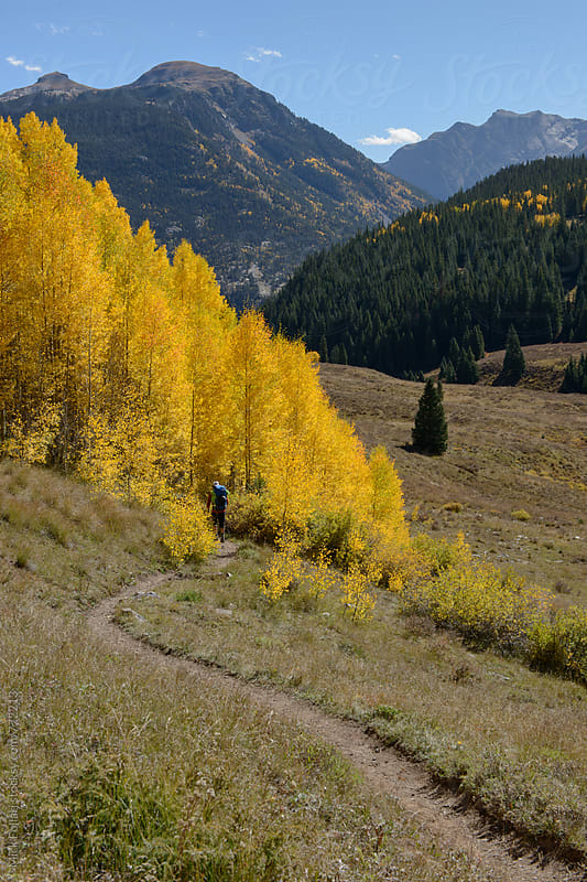 Hiker on trail into golden aspens by Mick Follari for Stocksy United