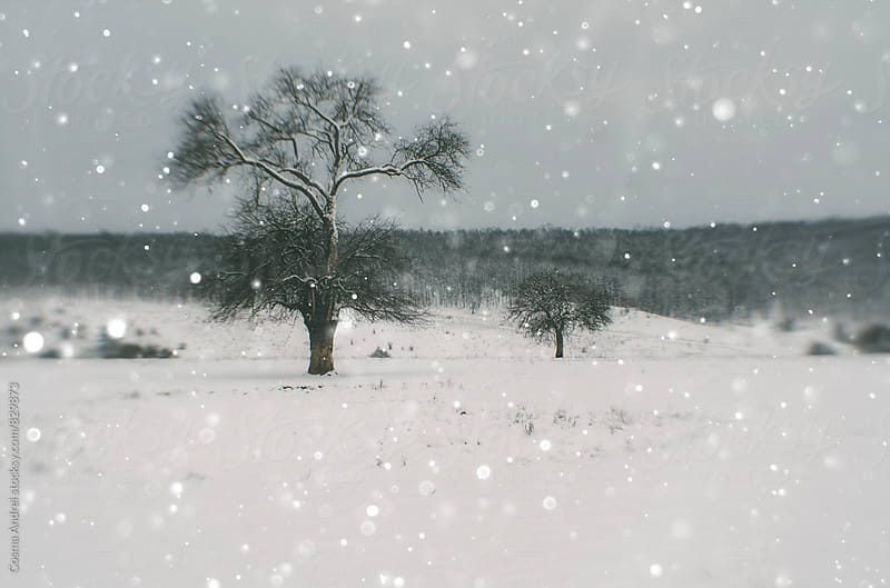 Winter landscape with snow  by Cosma Andrei for Stocksy United