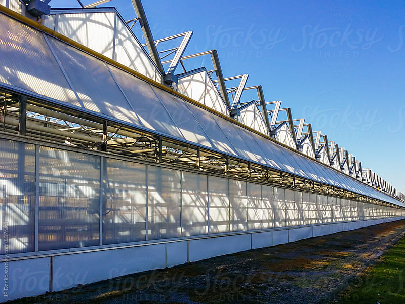 Row of Large Scale Industrial Greenhouse on Agricultural Farm Extending to Infinity by JP Danko for Stocksy United