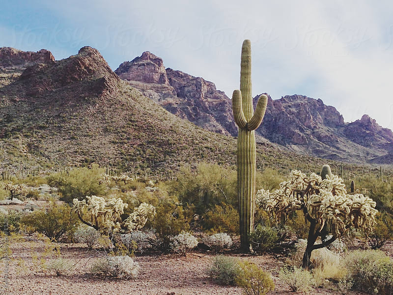 Arizona Landscape by Kevin Russ for Stocksy United