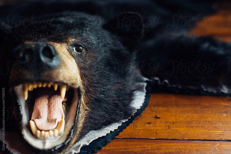 Open mouth of a brown bear carpet by Gabriel (Gabi) Bucataru for Stocksy United