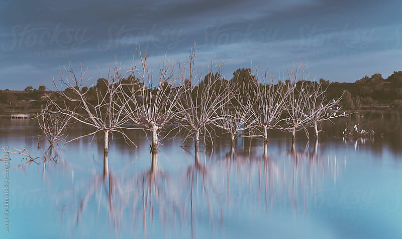 Landscape with tree inside the lake by Javier Pardina for Stocksy United