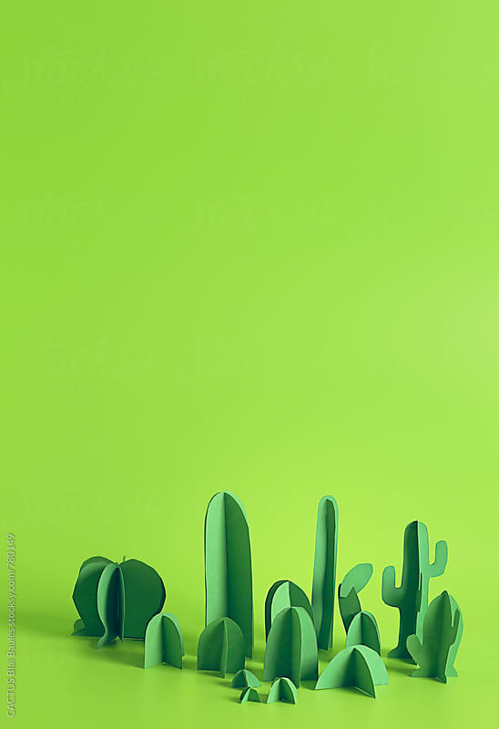 Cactus garden by CACTUS Blai Baules for Stocksy United