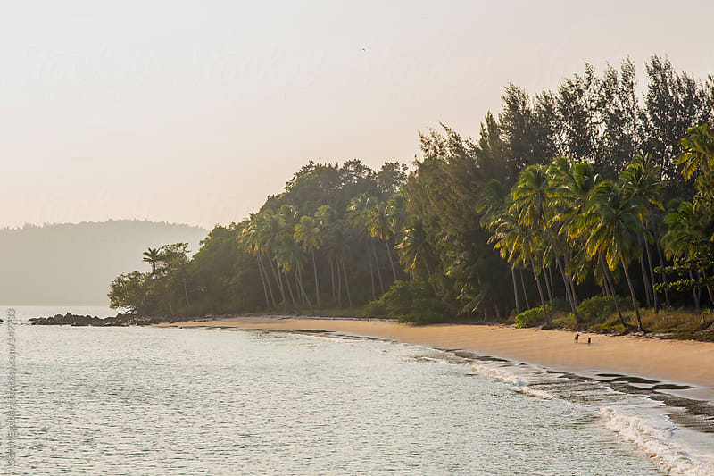 Tropical island beach with palm trees and hazy warm light. by Soren Egeberg for Stocksy United