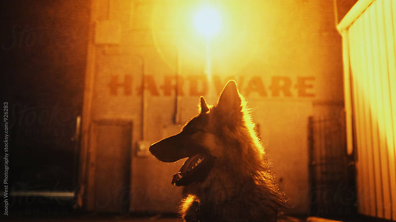 German Shepherd outside of store by Joseph West Photography for Stocksy United