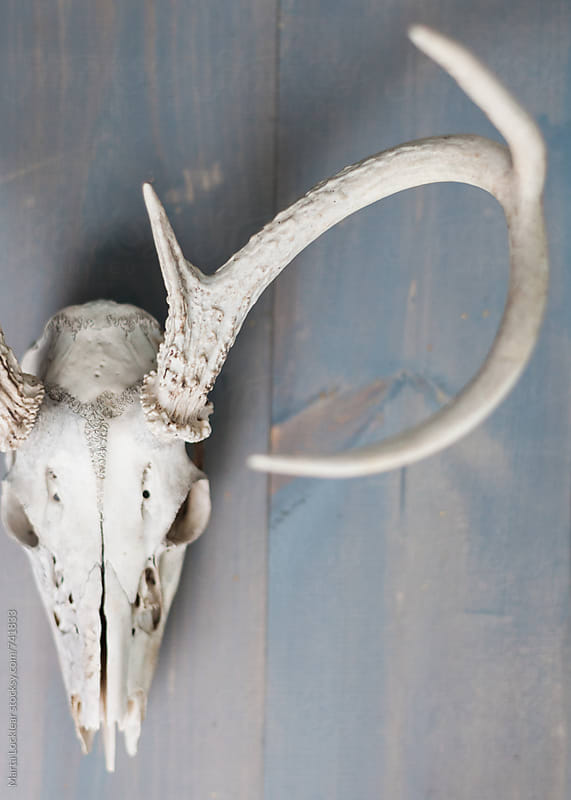 Deer Skull Decor by Marta Locklear for Stocksy United