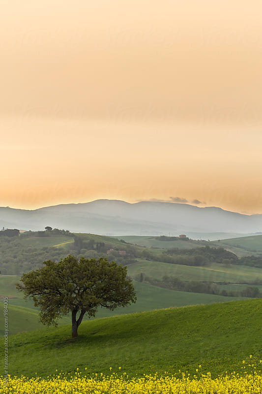 Tuscany landscape at sunrise  by Marilar Irastorza for Stocksy United