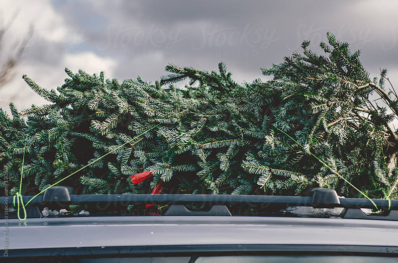 Christmas tree on roof rack of car by Deirdre Malfatto for Stocksy United