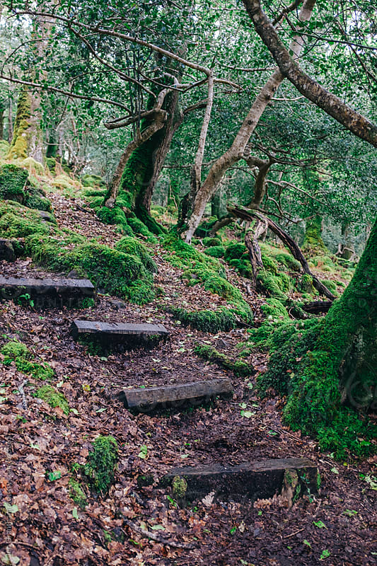 Stone staircase through Tomies Wood by Jen Grantham for Stocksy United