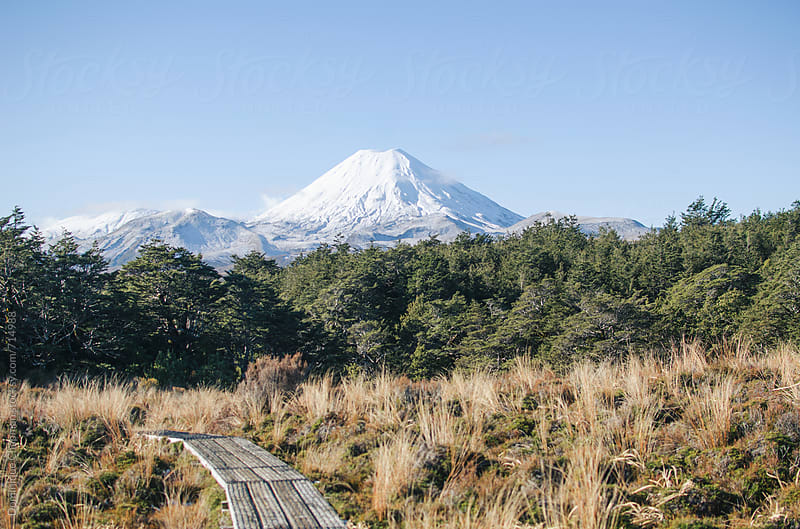 Walking trail with view of Mount Ngauruhoe by Dominique Chapman for Stocksy United