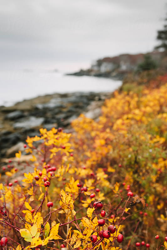 Coast of Maine in Late Autumn by Raymond Forbes LLC for Stocksy United