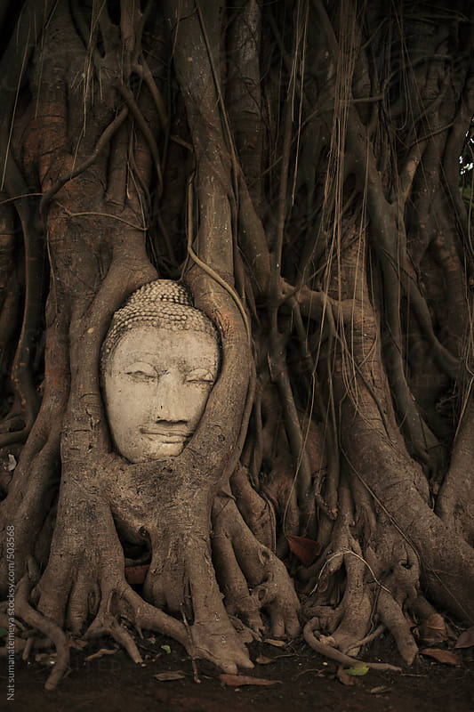 Buddha image in tree by Nat sumanatemeya for Stocksy United