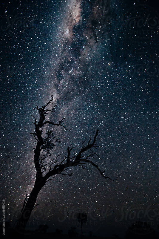 Tree silhouette against the stars and the milky way by Micky Wiswedel for Stocksy United
