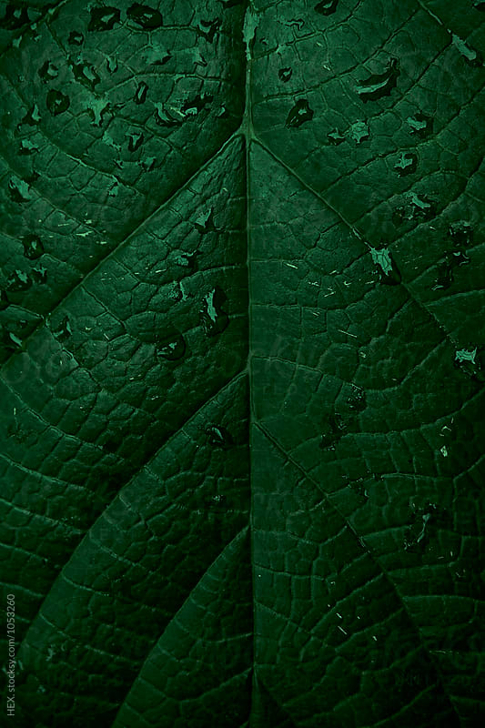 Abstract Green Tropical Leaf Background. Close up by HEX . for Stocksy United