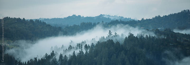 Fog nestled in the mountains after a storm by Carolyn Lagattuta for Stocksy United