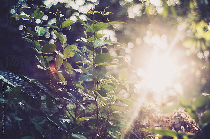 Sunsetting through bornean jungle by Dominique Chapman for Stocksy United
