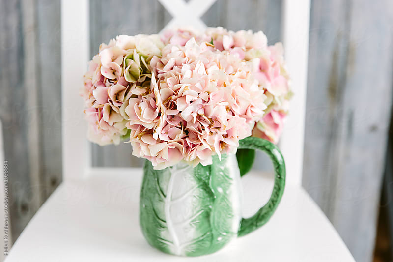 Pink Hydrangea blooms in a vintage cabbageware jug. by Helen Rushbrook for Stocksy United