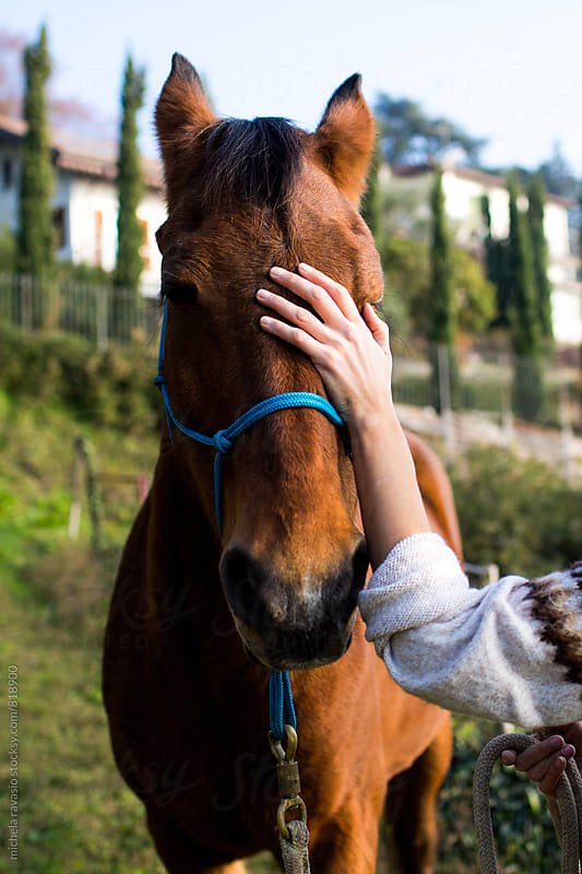 Female hand caressing a horse by michela ravasio for Stocksy United