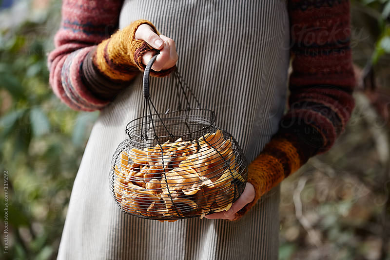 Woman mushroom foraging in the forest for chanterelle mushrooms by Trinette Reed for Stocksy United