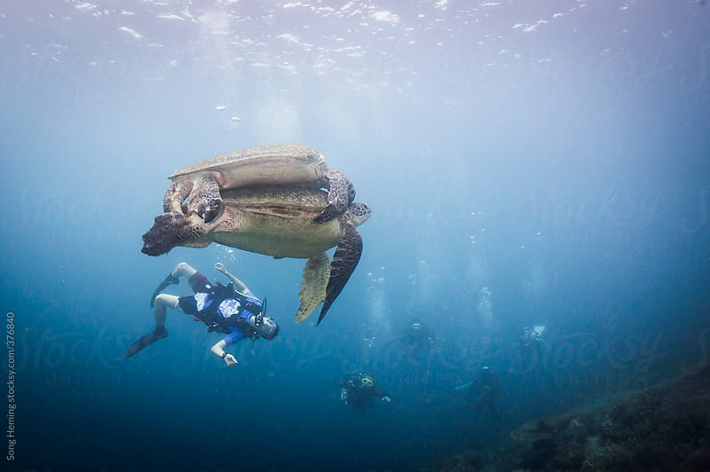 diving with sea turtles by Song Heming for Stocksy United