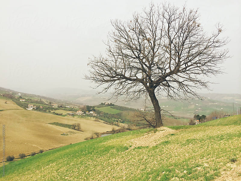 tree in countryside by Tommaso Tuzj for Stocksy United