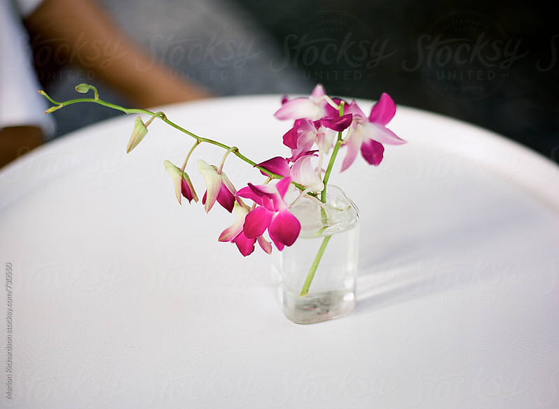 Orchids In A Glass by Marlon Richardson for Stocksy United