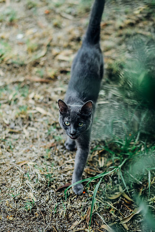 Camera aware walking cat by ZOA PHOTO for Stocksy United