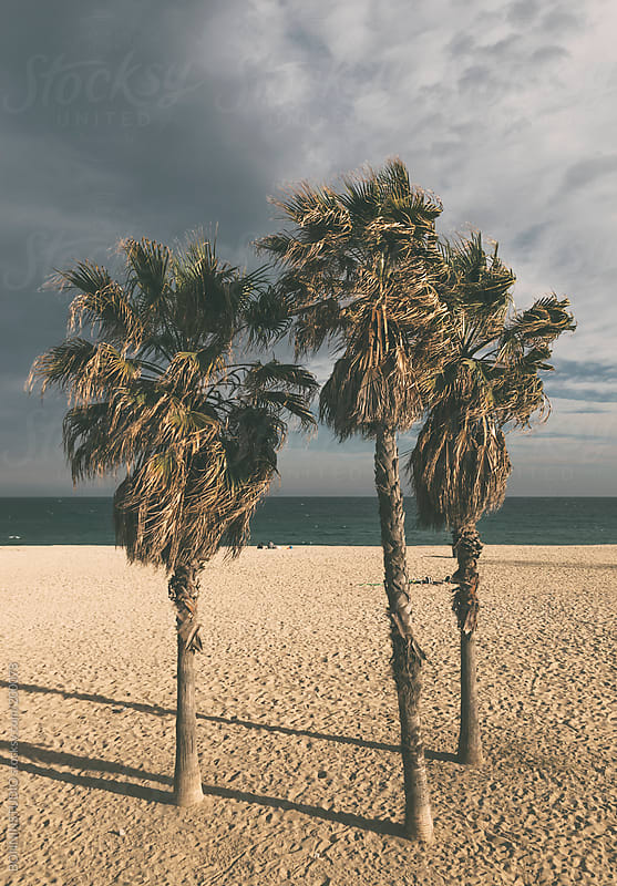 Three palm trees on the beach. by BONNINSTUDIO for Stocksy United