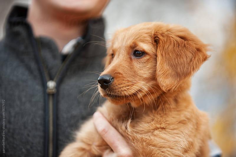 Dog Play by aaronbelford inc for Stocksy United