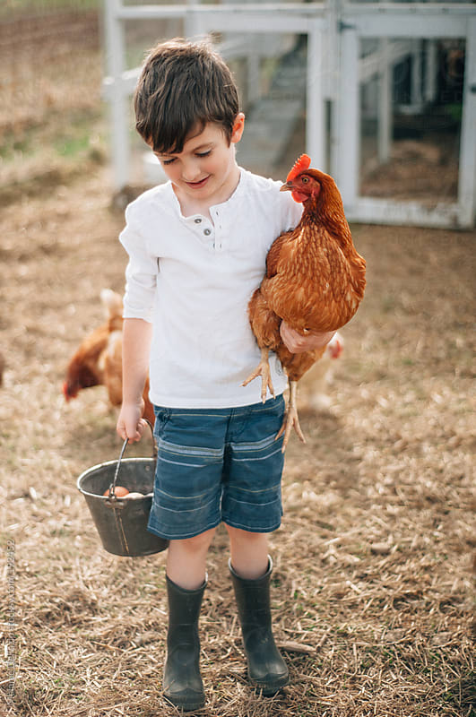 Chicken coop by Melanie DeFazio for Stocksy United