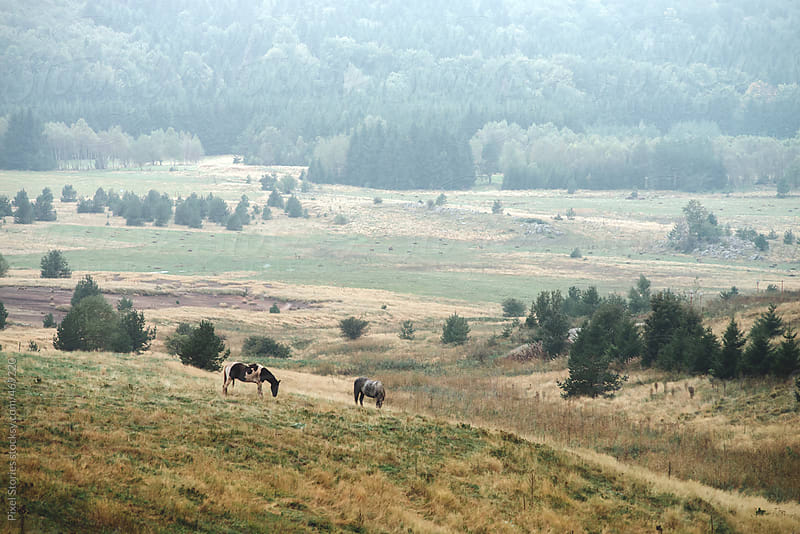 Horses in foggy field by Pixel Stories for Stocksy United