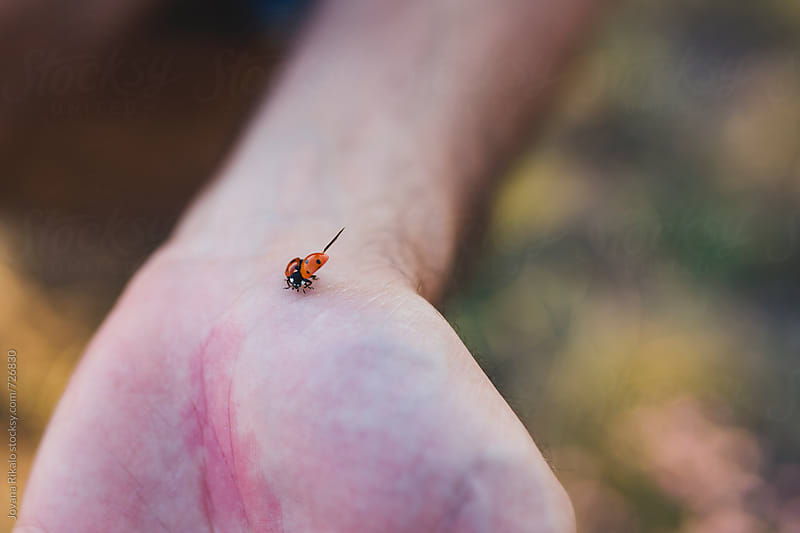 Ladybug on man's hand by Jovana Rikalo for Stocksy United