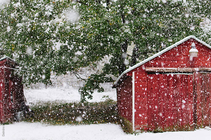 snow flakes falling near a red barn by Deirdre Malfatto for Stocksy United