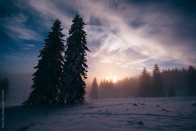 Foggy winter sunset in the Black Forst at Feldber by Peter Wey for Stocksy United