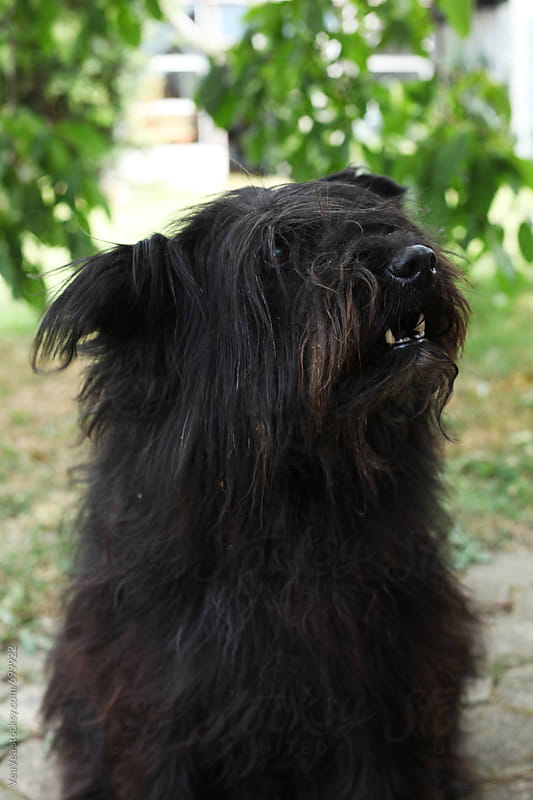 Big black countryside dog  by Marija Mandic for Stocksy United