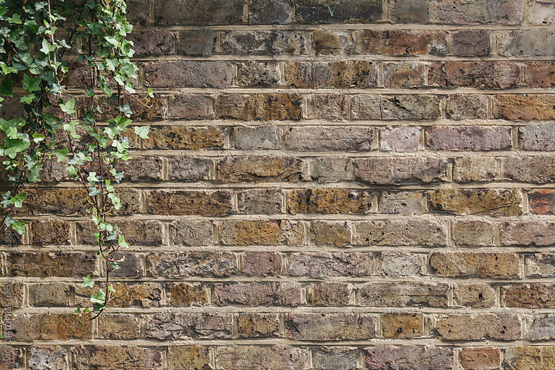 Grunge Brick Wall with Green Leafs by VICTOR TORRES for Stocksy United