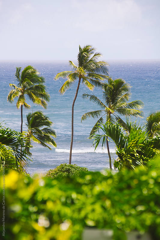 Palm trees with blue sea on tropical exotic island. Hawaii by Alejandro Moreno de Carlos for Stocksy United