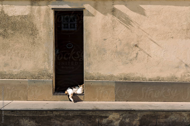 Cat sleeping near the door in sunlight in Italian Village by Trent Lanz for Stocksy United