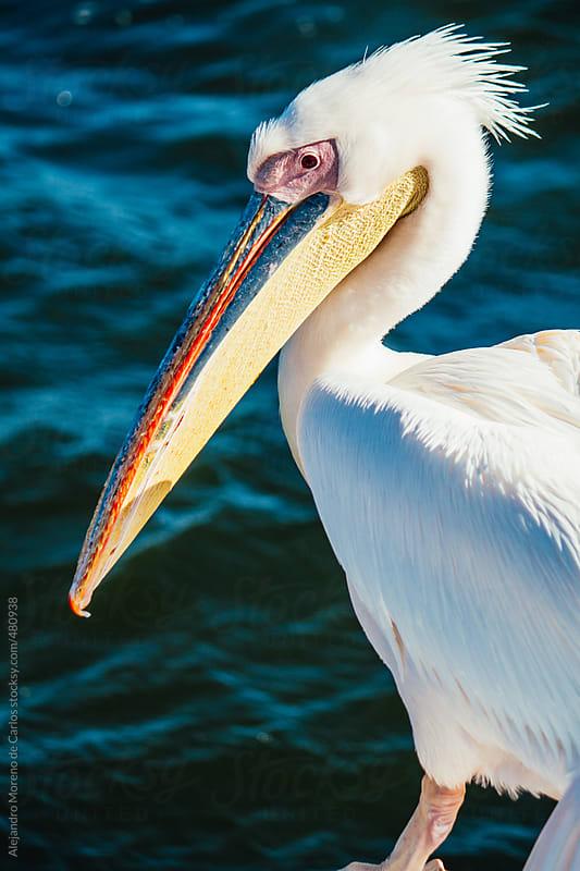 Pelican closeup shot at the sea by Alejandro Moreno de Carlos for Stocksy United