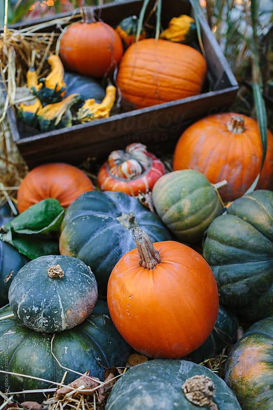 Autumn still life by Zocky for Stocksy United