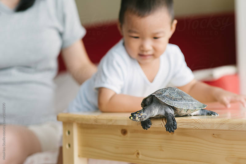 Toddler boy and mother playing with his pet turtle  by Maa Hoo for Stocksy United