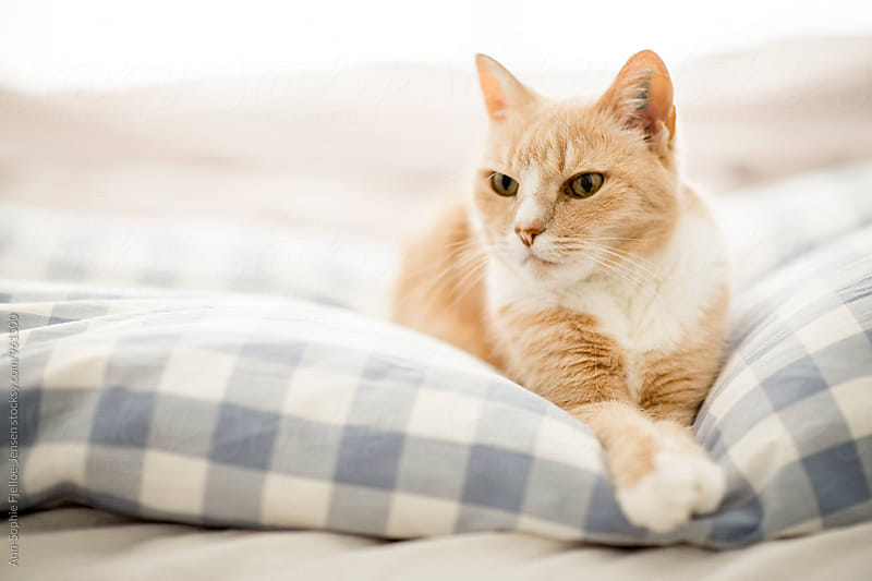Cat relaxing on a bed by Ann-Sophie Fjelloe-Jensen for Stocksy United